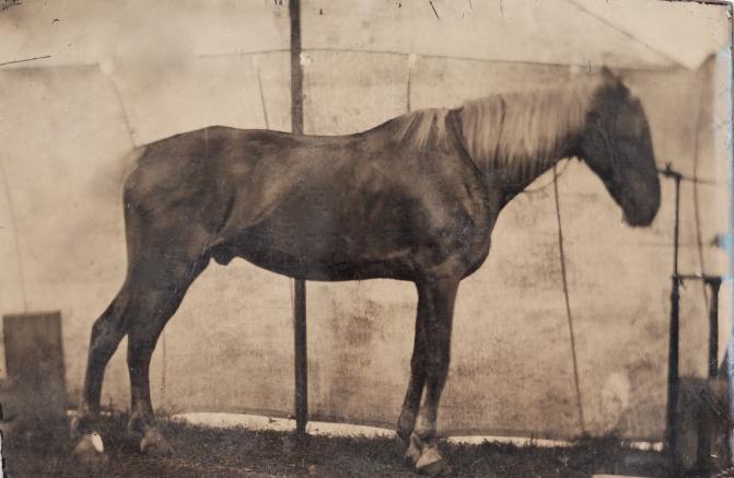 jeffords-horse-mack-lightened